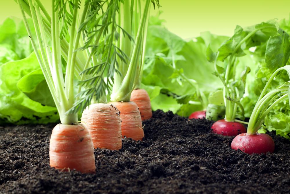 Partners — Sustainable Food Edmonton
