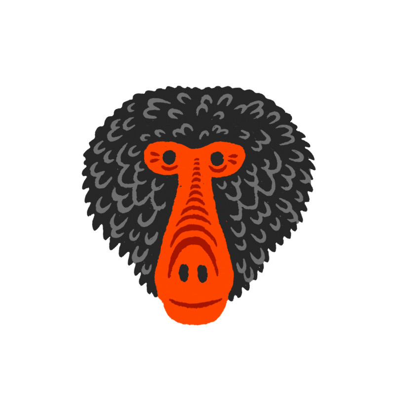 illustration_monkey-head-01.jpg
