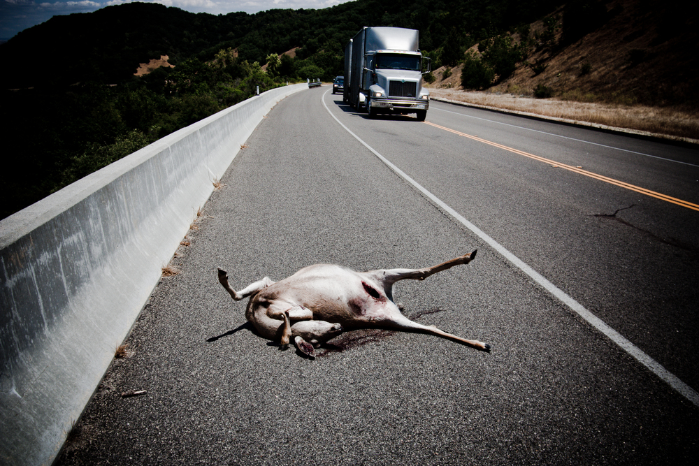 Roadside Victim