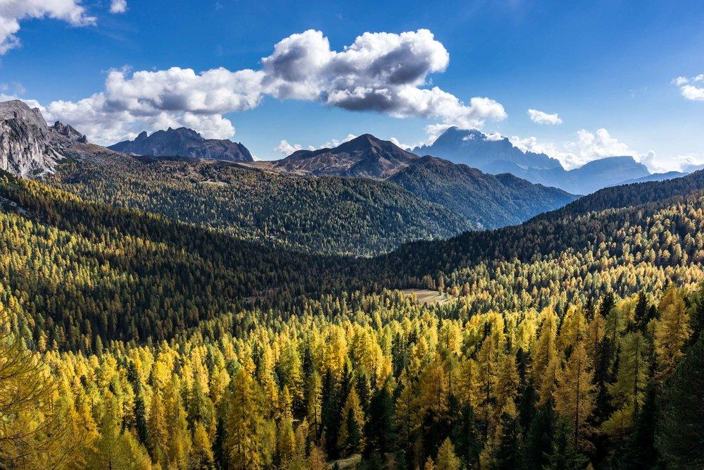 Bosco di larici dal Passo Valparola verso il Monte Pore _ a destra il Civetta