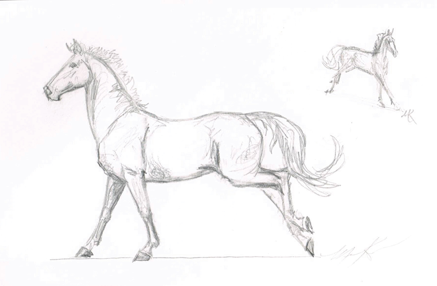 Original Sketch by Morgen Kilbourn for the CF Irish Sports Horse