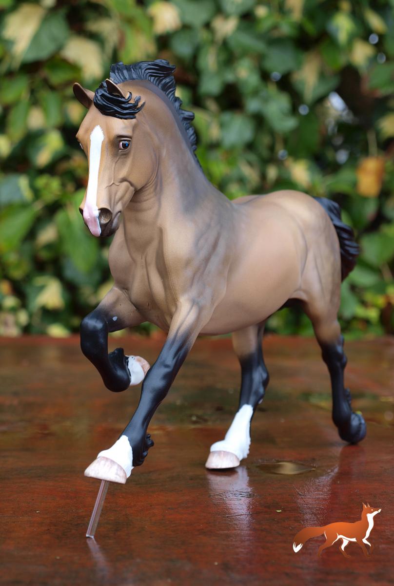 Copperfox Prince Cavalier