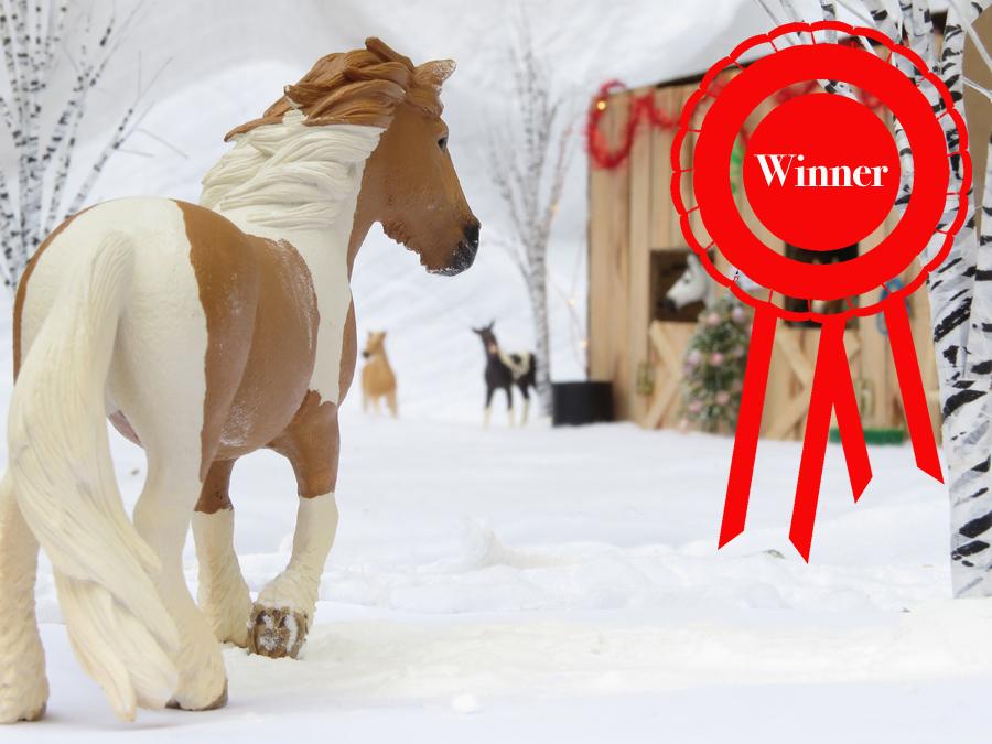 WINNER OF THE COPPERFOX DECEMBER PHOTO SHOW
