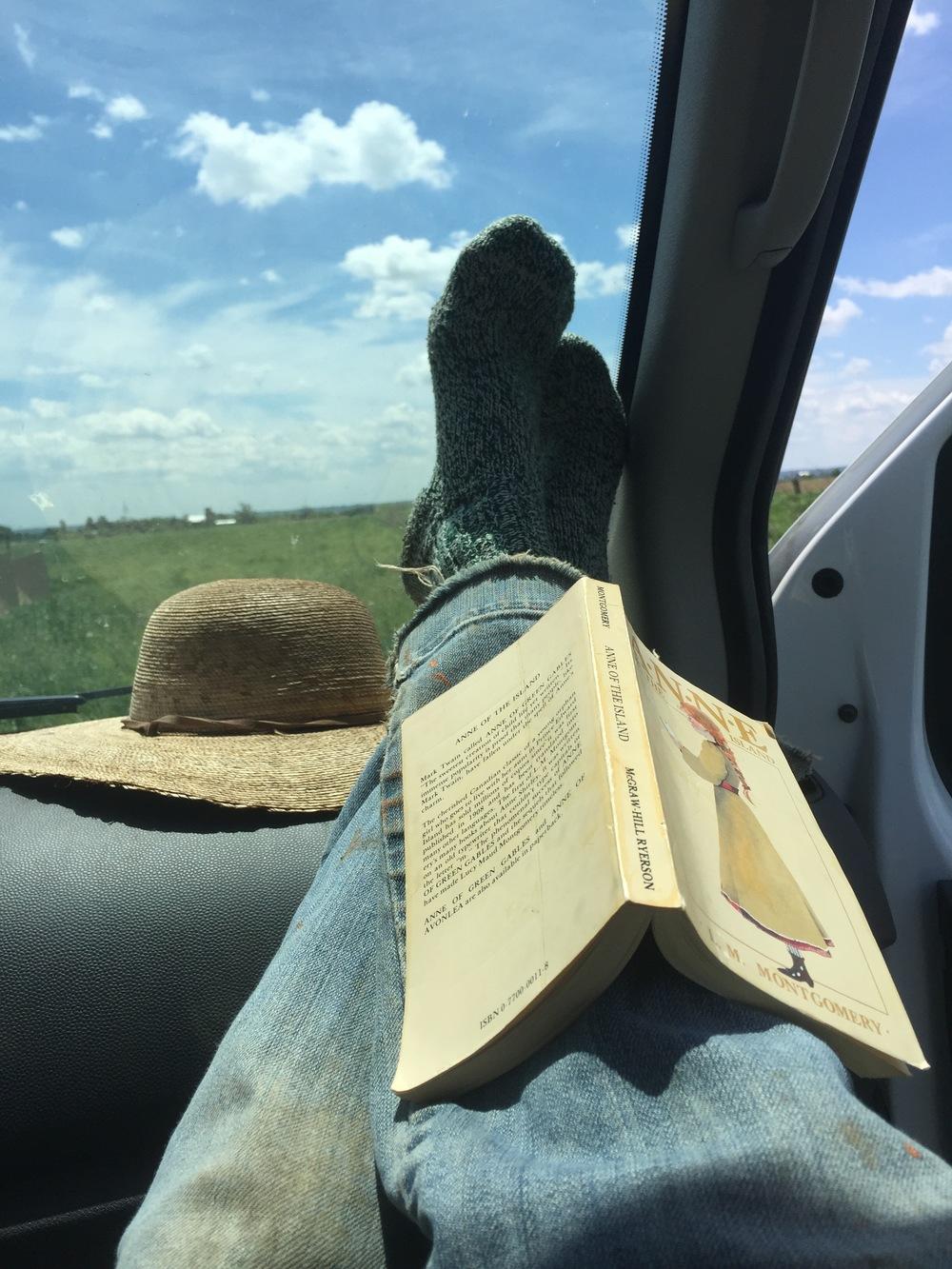 farm resting scene