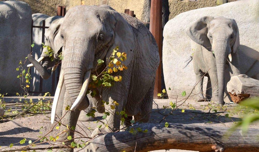 Snack in der neuen Elefanten-Anlage zu Basel