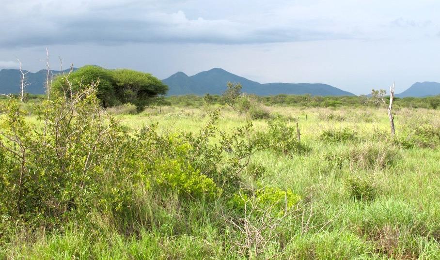 Keine Wildtiere: Von Rinderherden und Wilderei verdrängt | © Foto by Kimali Markwalder