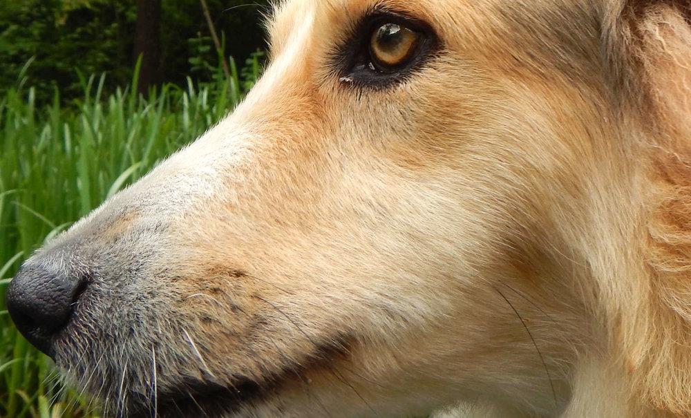 Untrügliche Hundenase (Symbolbild) |  © Foto Ruedi Suter