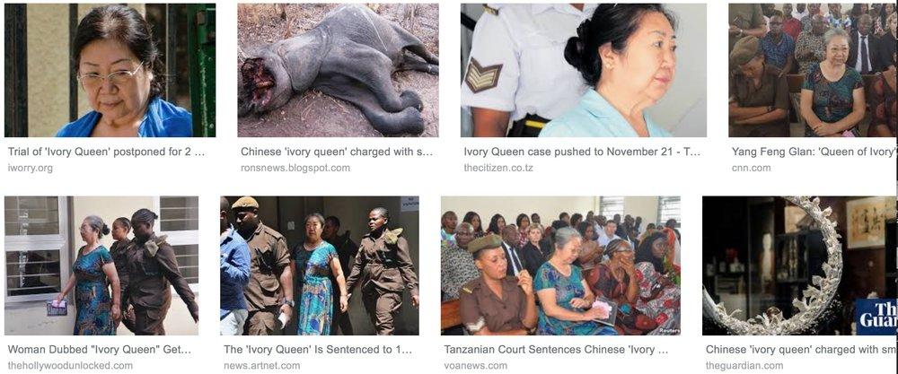 Eine «Elfenbeinkönigin» vor Gericht: Google zeigt Berichte |  Sceenshot