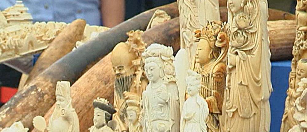 Elfenbeinschitzereien in China: Tausende Afrikanische Elefanten zahlen mit ihrem Leben |  Screenshot