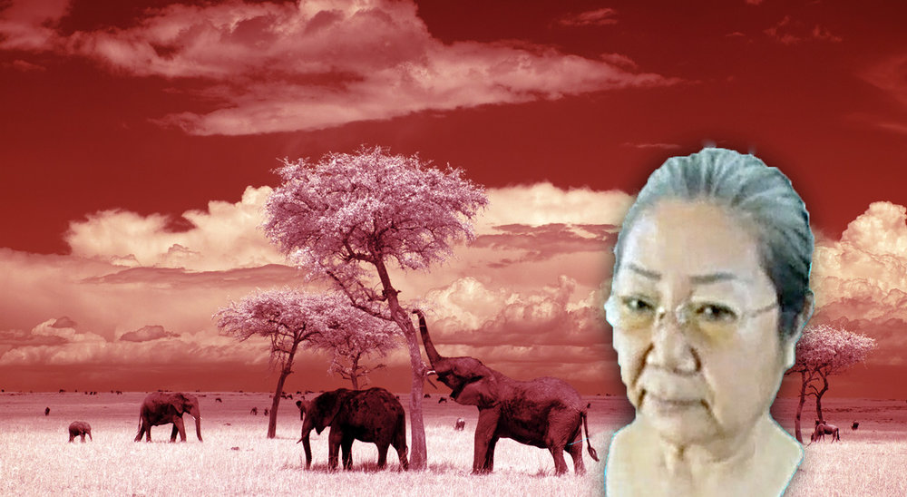 «Ivory Queen»: Strafe mit Schongang