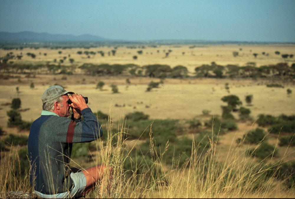 Spähen nach Wilderern: D. Rechsteiner bei Kirawira, West-Serengeti |  © Foto by Ruedi Suter