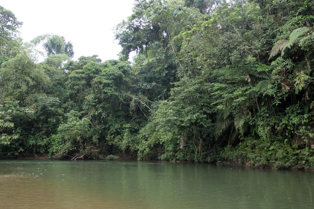 2015_6_27_Ecuador_Puyo_NaturePreserve.jpg