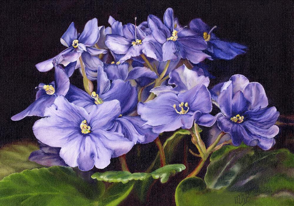 MaryBurke_Violets