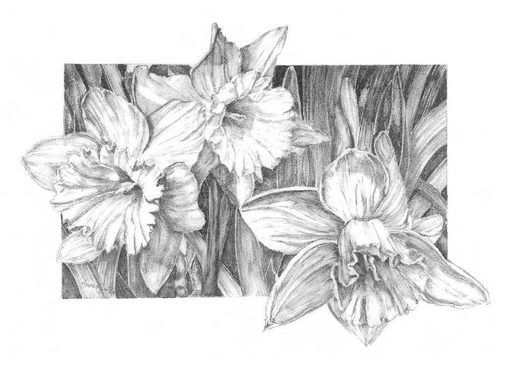 MaryBurke_Daffodils