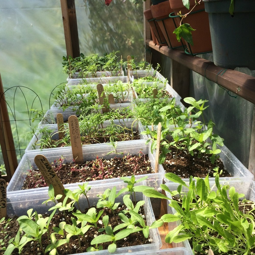 seedlings7.jpg