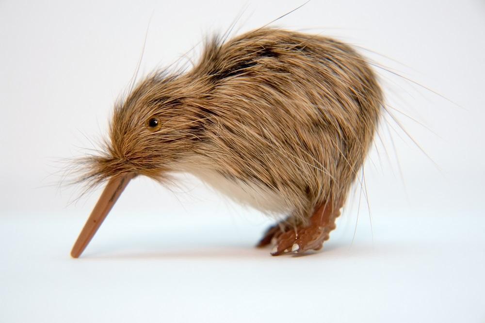 small kiwi toy bird