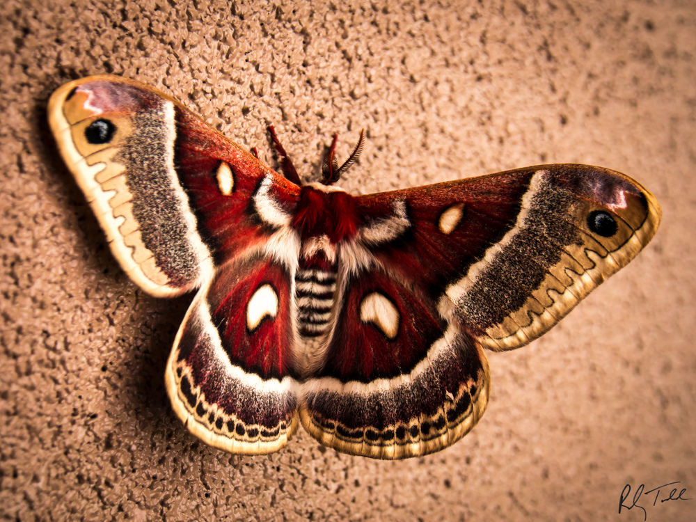 """Multi-personality Moth"""
