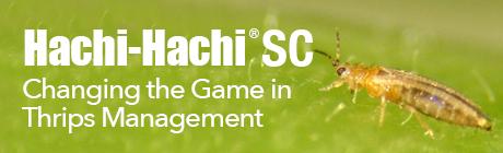 Hachi-Hachi-SC_Banner.png
