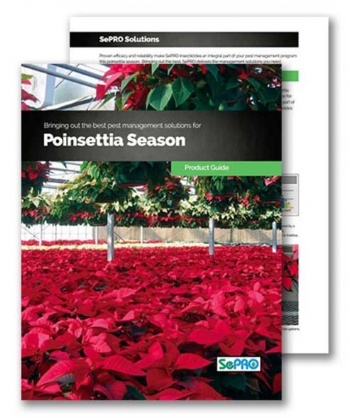 poinsettias-guide-image2.JPG