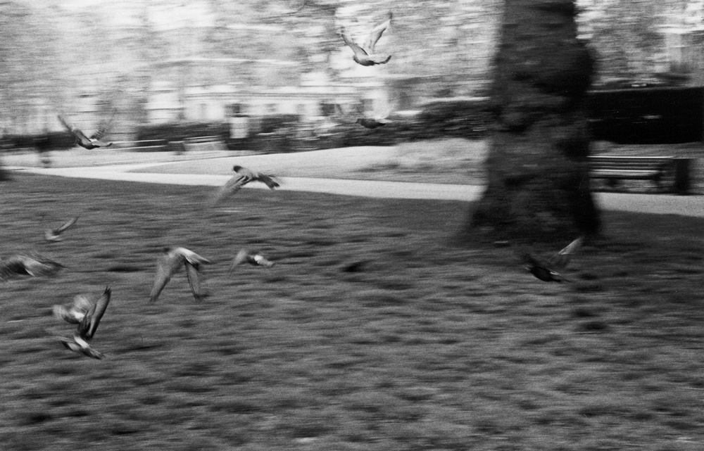 Birds in this country remind me of the parrots and wild animals in Africa.  I took this picture in Green Park.  I used to think there were no trees in London.  Because Africa has lots of bush, people imagine London to be so modern, that there will be no trees, no bush.  Maybe people here think that there are no buildings in Africa.   (c) Onesmus / Transparency / PhotoVoice