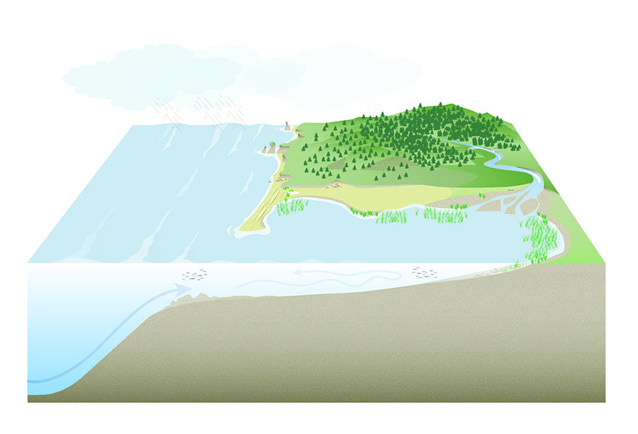Knowing my team wanted more than just another water cycle diagram,  I added ecosystems in order to illustrate how the water-land interaction affects the life where we live. As freshwater rushes in streams to salty water in the ocean it mixes in estuaries which are important habitats for shorebirds, seagrass, shellfish, and which are vital for fish and other species like crabs and insects. Well-managed forests in the upper watershed limit sediment runoff improving water quality and flow.