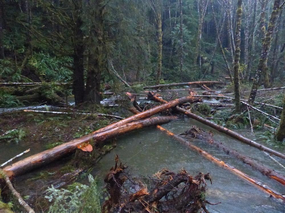 Ellsworth Creek Log Jam.JPG