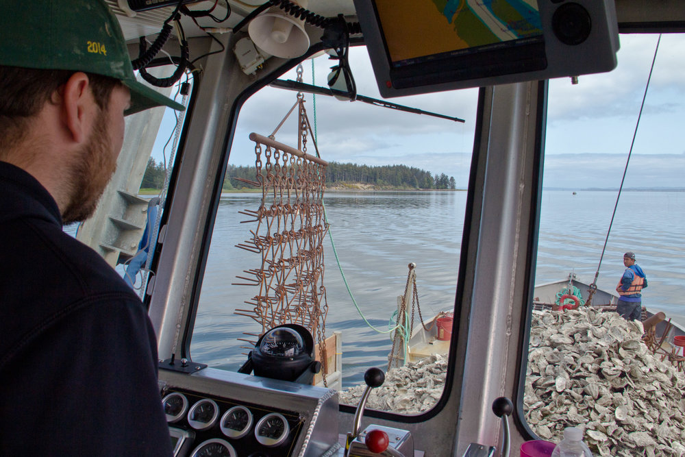 Mike Lambert, captains the oyster scow Nahcotta Express in Willapa Bay, Pacific County. Photo by Joel Rogers.
