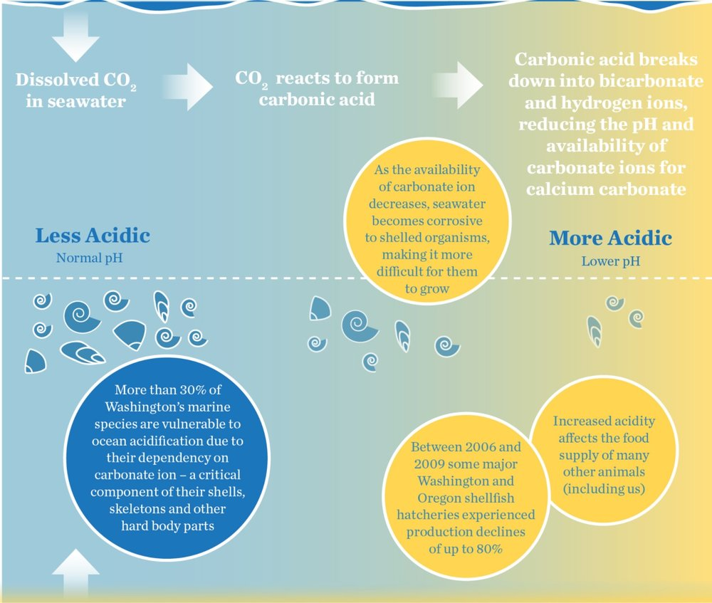 What is ocean acidification? Click this image to learn more.