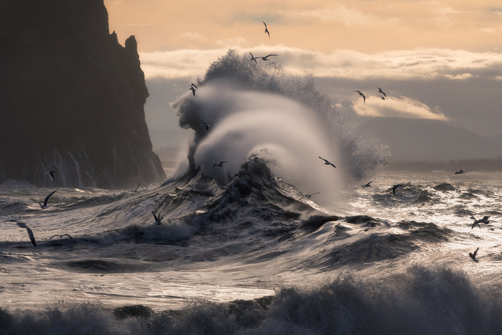 Photo © Majeed Badizadegan