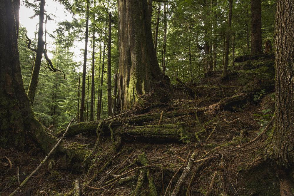 Spruce forest. Photo credit: © Chris Crisman