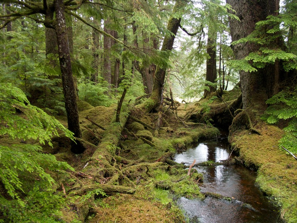 Windy Bay forest in Gwaii Haanas National Park Reserve. Photo by Sam Beebe on Flickr / used by cc-by-2.0