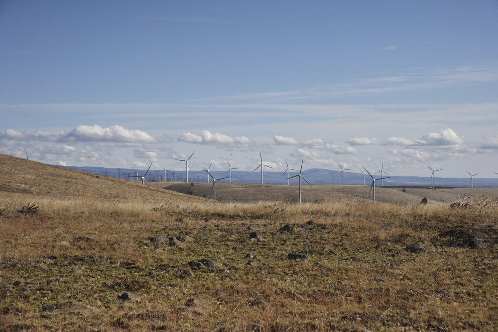 View of an Eastern Washington wind farm from Swauk Creek Ranch.  Photo by Anna Snook.