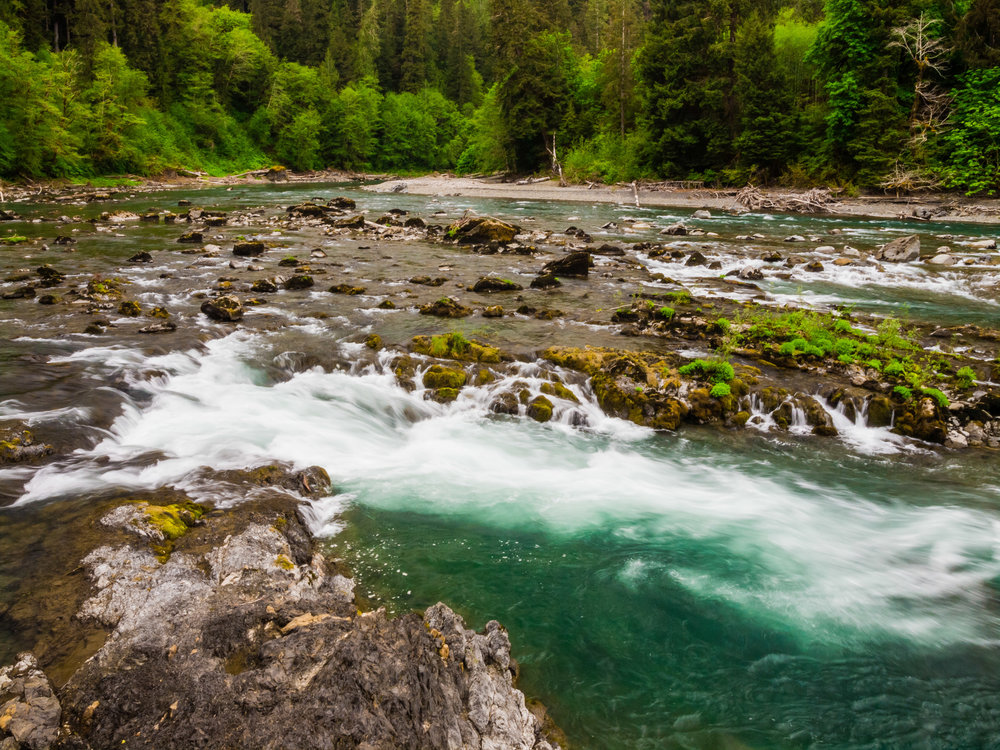 Wild Hoh River