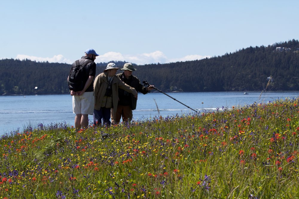 Yellow Island visitors point at blooming wildflowers. Photo by Sean Galvin.