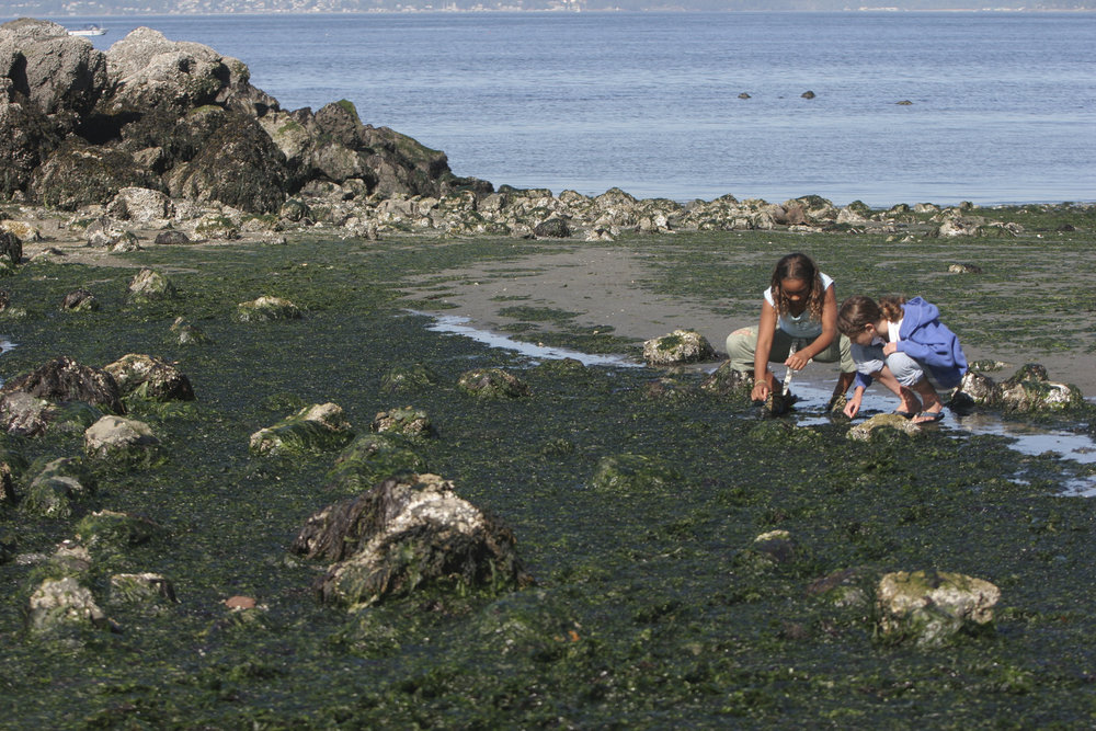 Too young girls examine intertidal life along Puget Sound.  Photo by Ellen Banner
