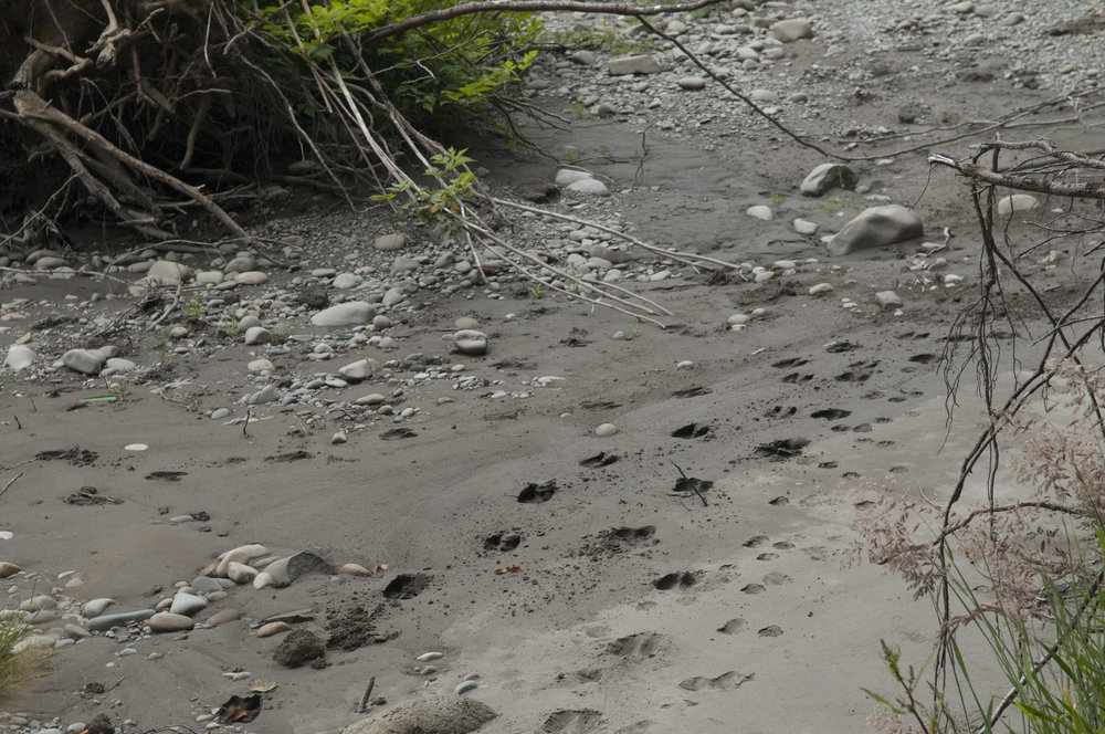 Strange tracks along the river's bank. Photo by Nikolaj Lasbo/TNC