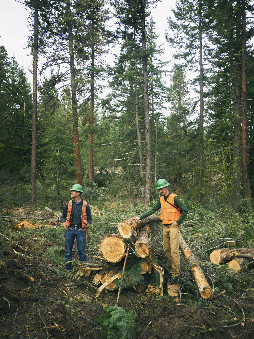 Thinning to restore forest health in Central Washington. Photo © Nathan Hadley.