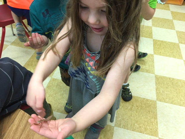 Where else but preschool can you start a morning with cosmic science and end it with a praying mantis?