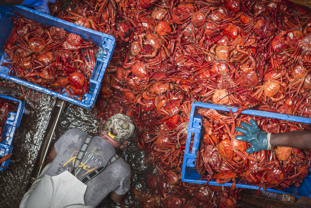 Atlantic Red Crabs, caught off the coast of the mid- and north Atlantic is the only Marine Stewardship Council (MSC) certified crab in North America. Photo © Jason Houston