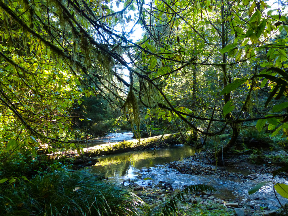 Ellsworth Creek is a continual inspiration. Photo © David Ryan / TNC
