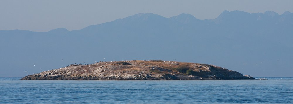 Goose Island (2008 from the north) with double-crested cormorants (upper left of the island), glaucous-winged gulls scattered across the island, and a few harbor seals on the beach (shadowed area right side of the island). Photo © Phil Green / TNC