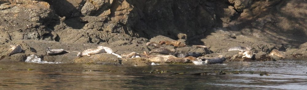 Harbor seals on the southeast corner of Sentinel Island. Photo © Phil Green / TNC