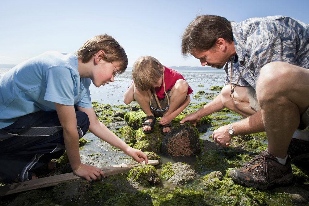 Bob Carey and his two sons turn over a rock on the beach of Barnum Point to discover what wonders might be hidden beneath. Photo © Benj Drummond.