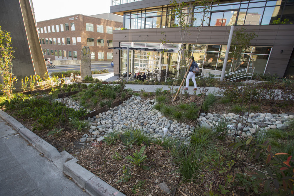 Rain gardens in the roadside planting strip next to the Data 1 building and under the Aurora Bridge. Photo © Hannah Letinich / TNC