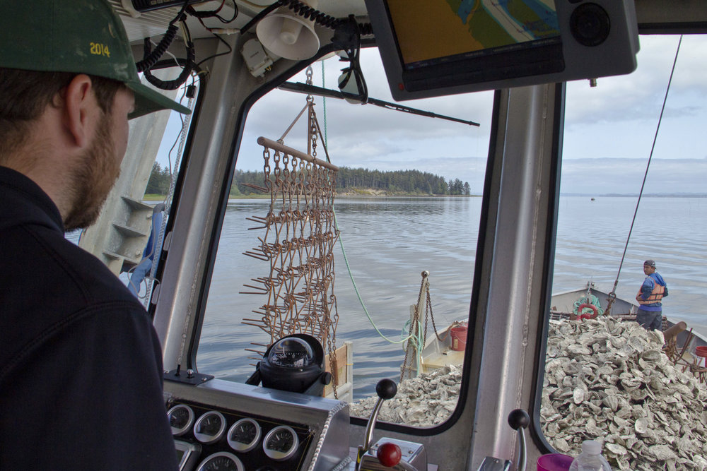 Mike Lambert, captain of the oyster scow, Nahcotta Express, in Willapa Bay, Pacific County. Photo © Joel Rogers.
