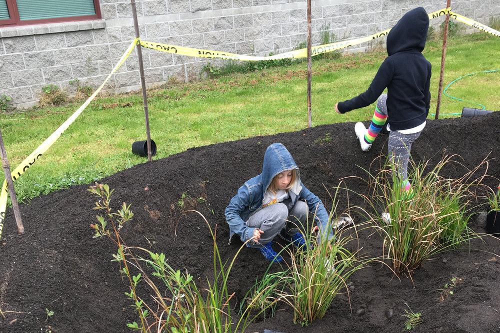 Pathfinder Elementary schoolchildren plant elements of the rain garden. Photo courtesy of Tasha Mosher.