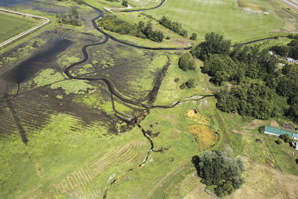 Aerial photograph of Fisher Slough after restoration, showing part of the new tidal marsh and channels. Photo by Marlin Greene / One Earth Images.