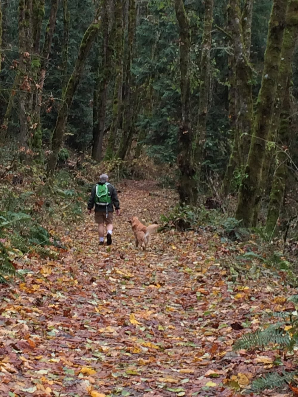 Cougar Mountain was an abundance of Thanksgiving color. Photo © Carrie Krueger.