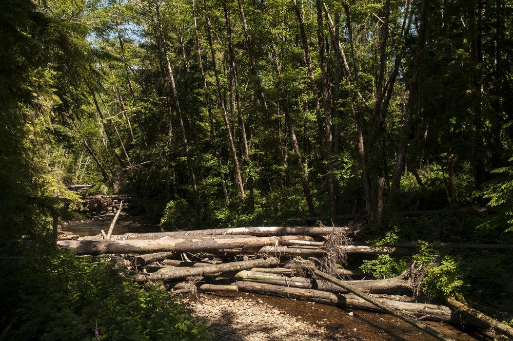 A Hurst Creek log jam in summer 2017. Photo © Nikolaj Lasbo / TNC