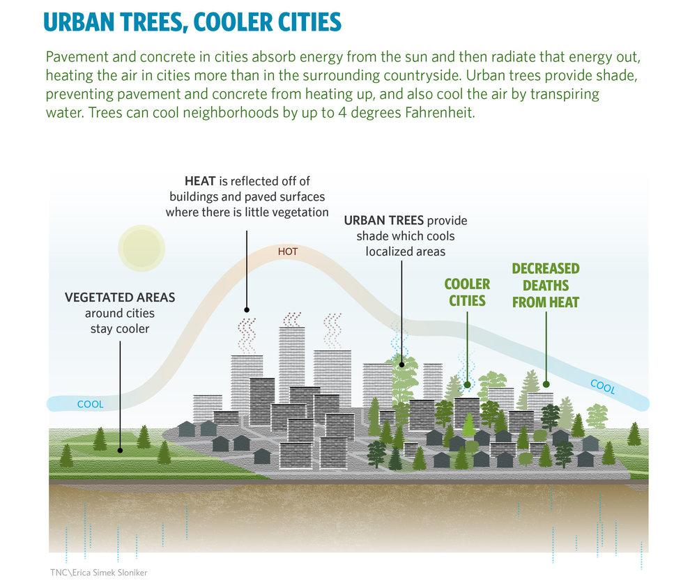 urban heat.jpg